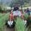 これで楽々!白ねぎ土よせ作業の機械化・省力化(島根県内農業の紹介シリーズ No.8)